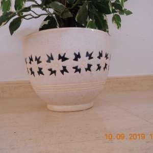 For sale: indoor imitation plant with Variegated Leaves
